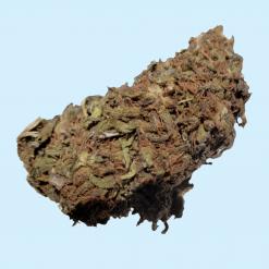 Harlequin Strain CBD Hemp Flower