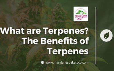 What are Terpenes? The Benefits of Terpenes